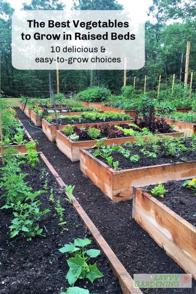 Discover the best vegetables to grow in raised beds