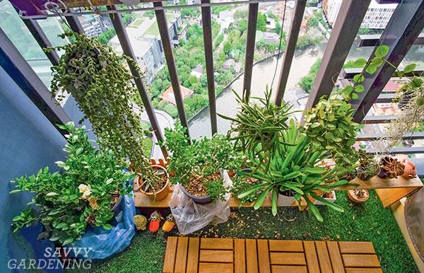 plants on a balcony floor