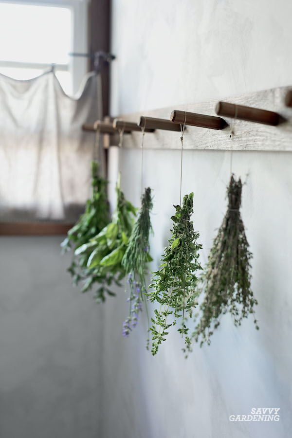 Preserving herbs by drying them