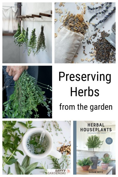 Homegrown herbs pack a powerful punch. But preserving herbs can be a challenge for those who haven't done it before. Learn how to preserve herbs via drying and freezing, plus tips for using them to make butters and herb-infused vinegars.