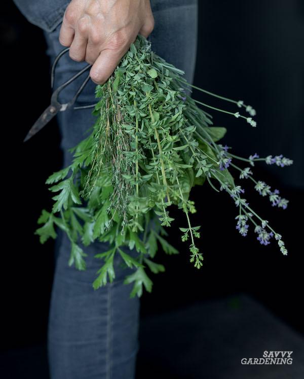 Tips for preserving fresh herbs