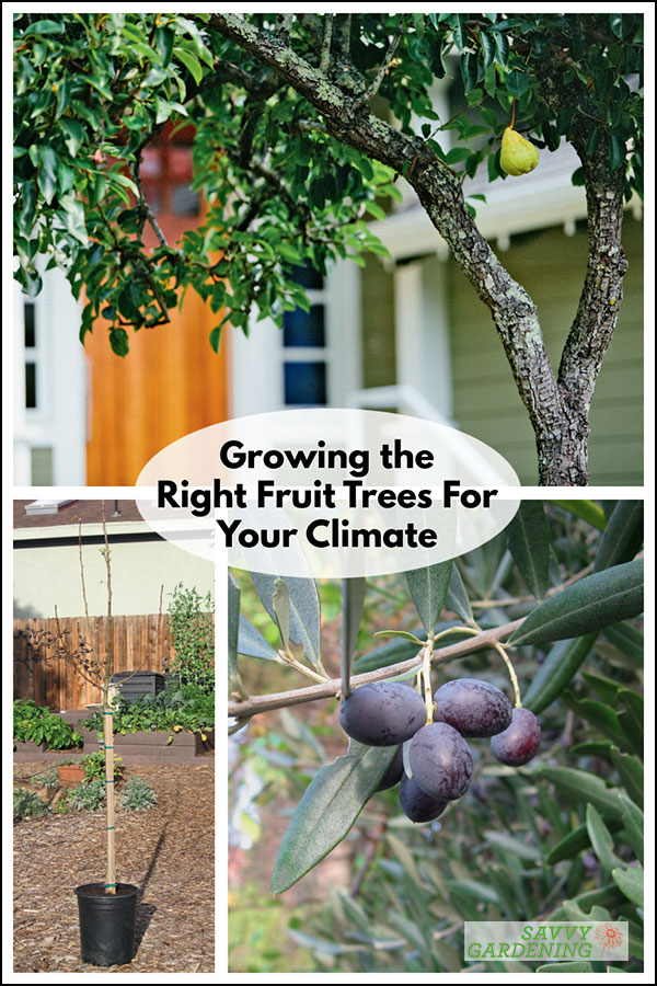 learn how to grow the right fruit trees for your climate