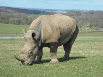 Heading to Longleat Safari Park this Summer? Here are my top tips for cutting costs and getting the best value for the money you're spending