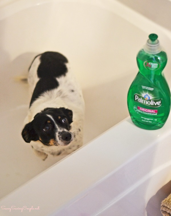 Can You Use Dove Body Wash On Dogs : Effective, Shampoo!