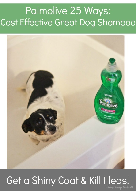 Can You Use Dove Body Wash On Dogs : DogWalls