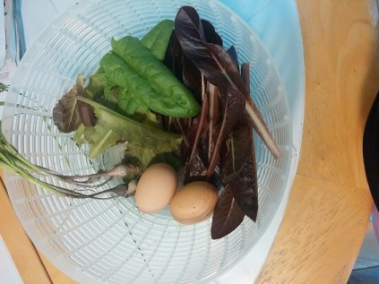 Spinach, lettuce, young garlic (I had to dig it up because it was in the way), and eggs!
