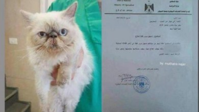 Photo of قطة تكسر حصار غزة للعلاج