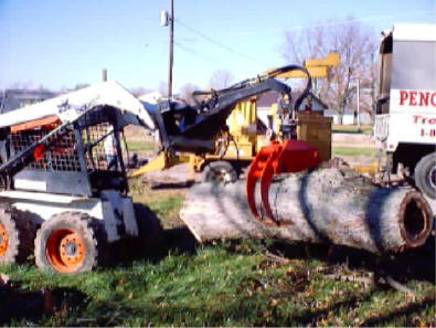 Hollow Tree Removal