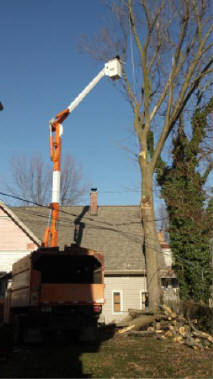 Tree Removal in Fort Wayne