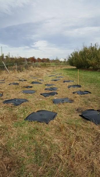sawkillwatershedcommunitytreeplantingrosehillfarm2