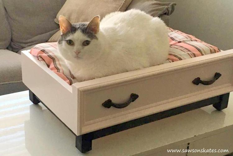 cat in diy dog bed sos