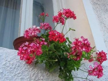 flowers in delpae