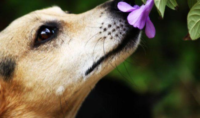 dog smelling