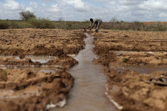 A farmer works in an irrigated field near the village of Botor, Somaliland April 16, 2016. Across the Horn of Africa, millions have been hit by the severe El Nino-related drought. Reuters/Siegfried Modola