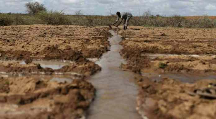 How Technology Is Helping Farmers Predict And Prepare For El Niño