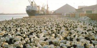 Saudi Arabia Bans Livestock Imports From Sudan And Djibouti