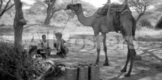 Epidemics And Public Health In Early Colonial Somaliland