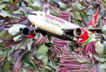 Kenyan Traders Suffer Sh8m Loss As Miraa Flight Is Turned Back On Its Way To Somaliland