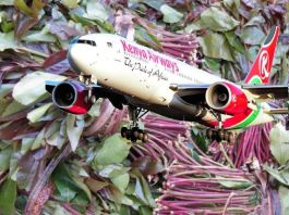 Kenyan Traders Suffer Sh8m Loss As Miraa Flight Is Turned Back On Its Way To Somaliland