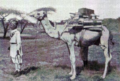 Maxim Gun on a camel