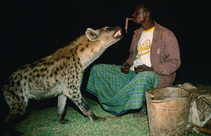 Harar, Where Hyena Is Man's Best Friend