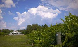 benjamin-vineyards-2585