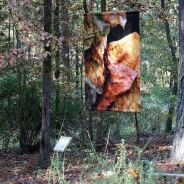 WOODLAND BANNERS POETRY WALK (Take a Walk on the Wild Side)