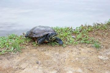 cute turtle...