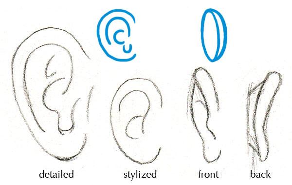 گوش ها