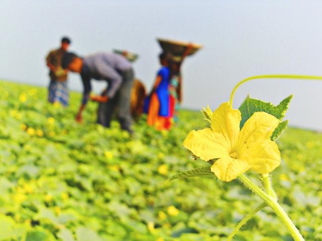 畑で農作業する外国人労働者