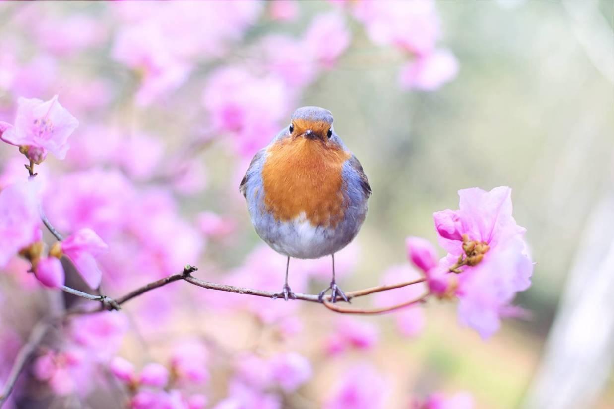 beautiful bird bloom blossom