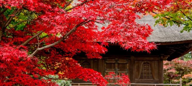 平林寺の紅葉と睡足軒の森ライトアップ