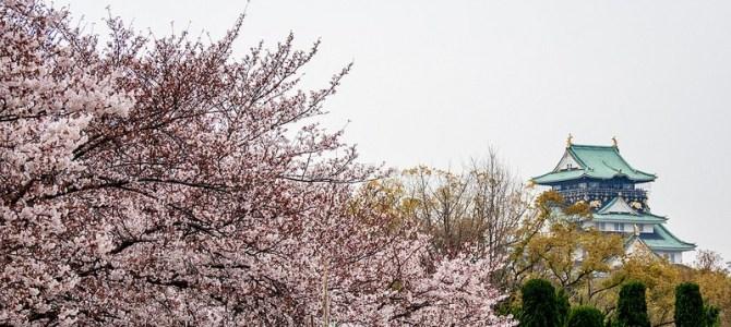 大阪城公園の桜  #桜 #Locketsリレー