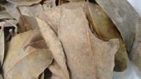 Folha de louro seca