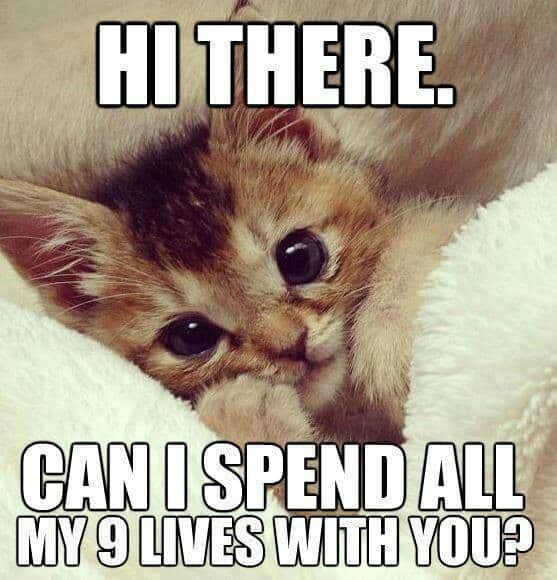 20 cute love memes