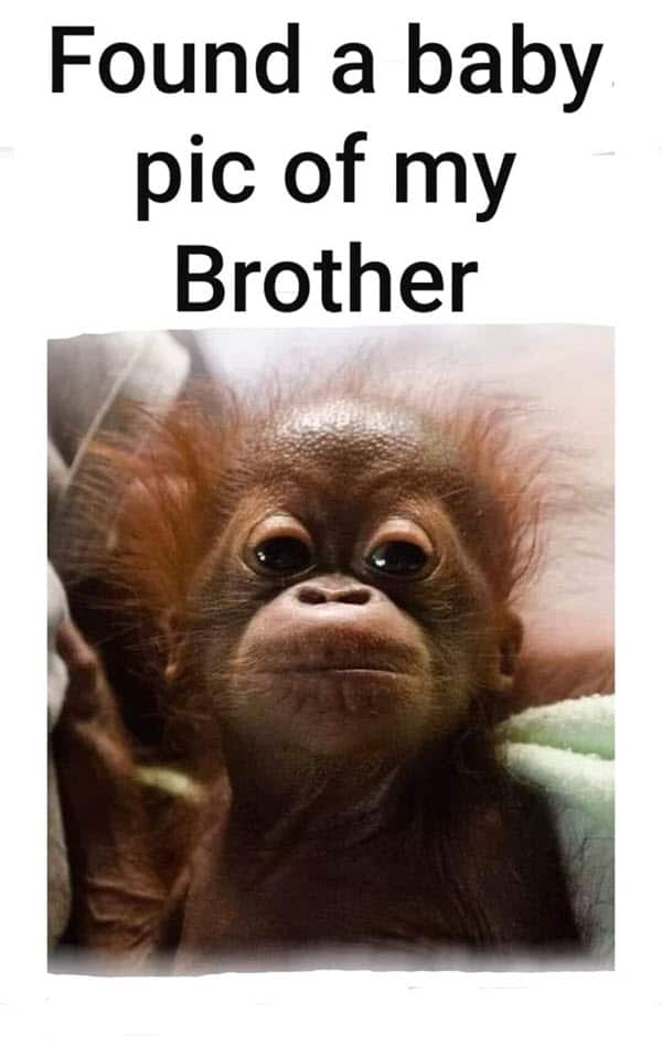 Funny Things To Say To Your Brother : funny, things, brother, Funny, Brother, Memes, Troll, Sibling, SayingImages.com