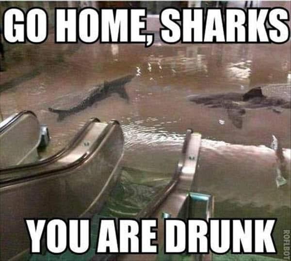 funny drunk go home sharks memes
