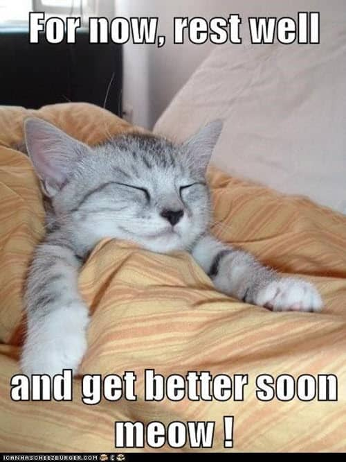 get well soon get better meow meme