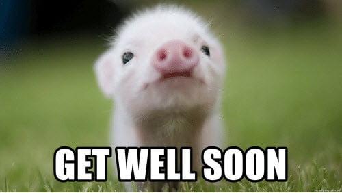 get well soon pig meme
