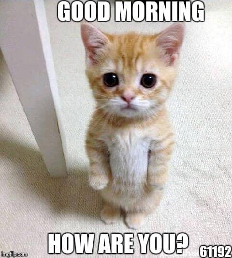 80 Good Morning Memes To Kickstart Your Day | SayingImages.com