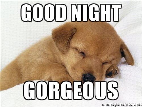 20 cutest goodnight memes