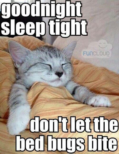 Good Night Meme : night, Cutest, Goodnight, Memes, SayingImages.com
