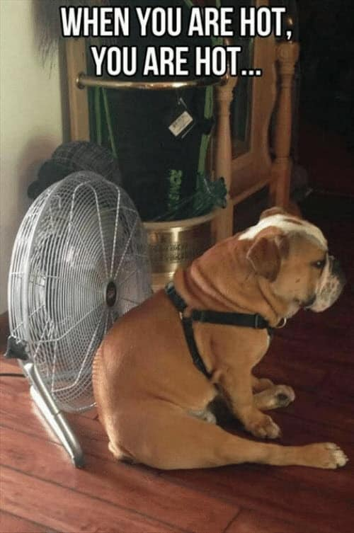 Funny Hot Weather Meme : funny, weather, Weather, Memes, That'll, SayingImages.com