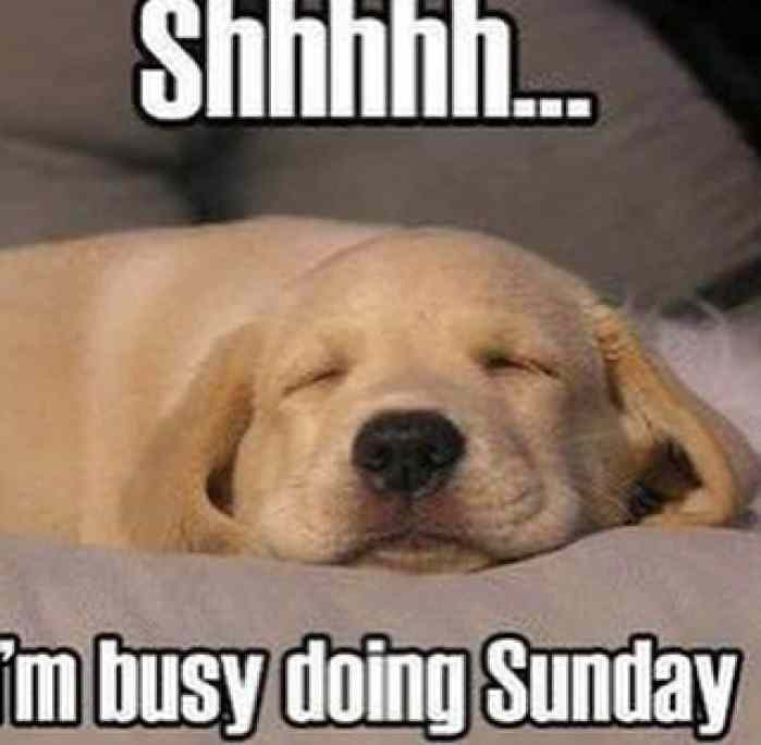 20 Sunday Memes That'll Complete Your Weekend | SayingImages.com
