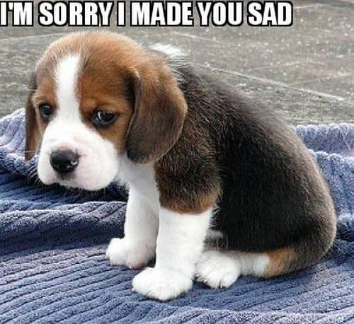 im sorry i made you mad meme