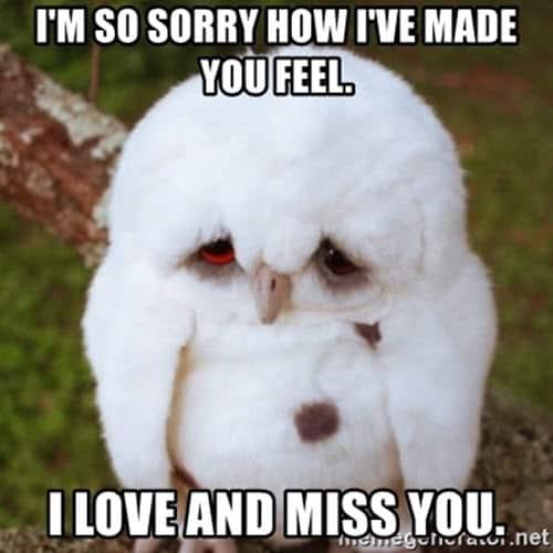 im sorry made you feel meme