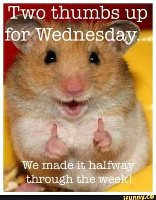 Funny Wednesday Memes : funny, wednesday, memes, Really, Funny, Wednesday, Memes, Through, SayingImages.com