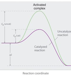 this graph compares potential energy diagrams for a single step reaction in the presence and absence of a catalyst the only effect of the catalyst is to  [ 1589 x 1016 Pixel ]