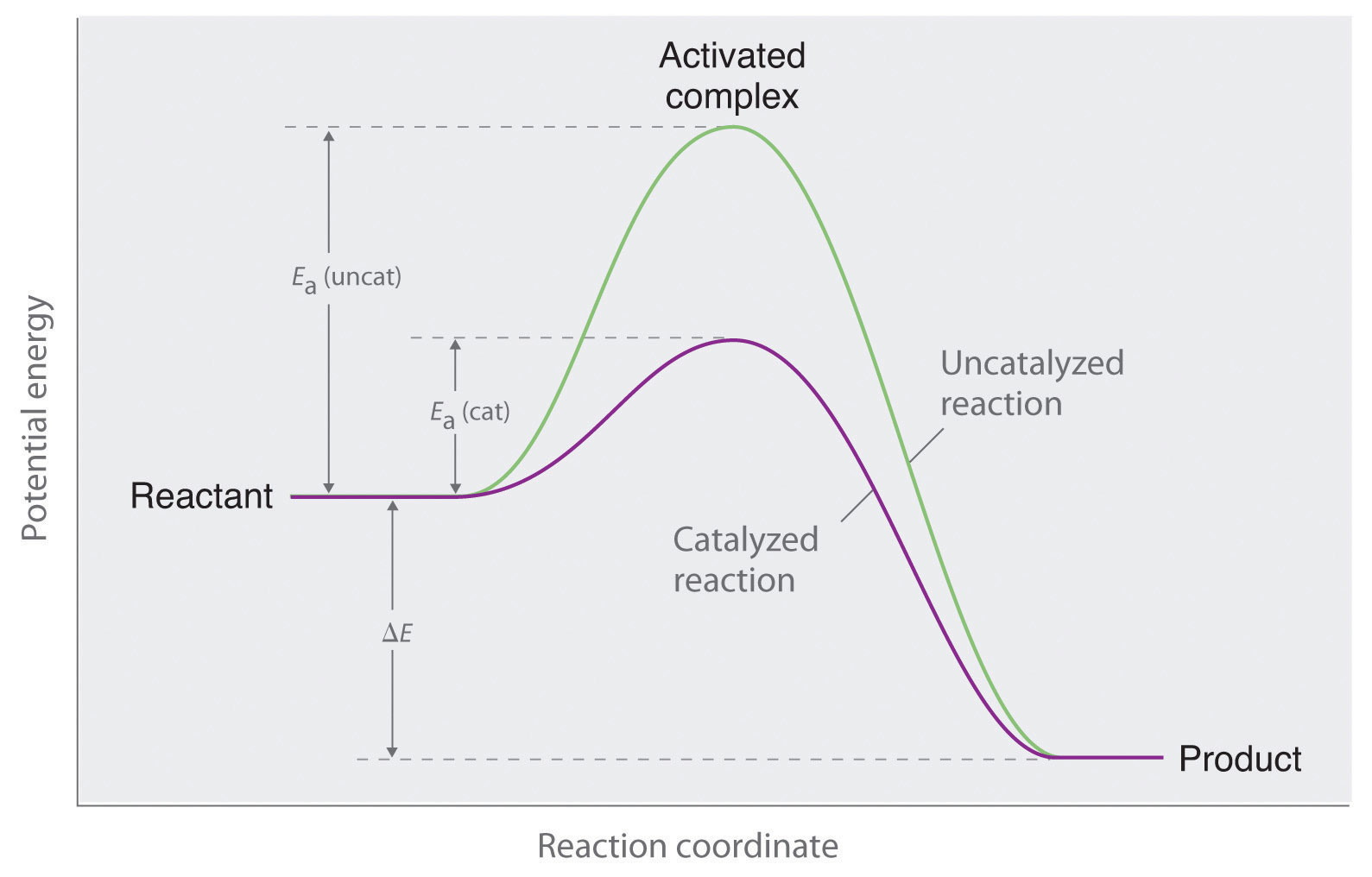 hight resolution of this graph compares potential energy diagrams for a single step reaction in the presence and absence of a catalyst the only effect of the catalyst is to