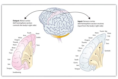 small resolution of functions of the cortex